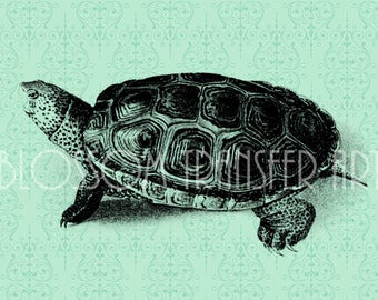 Turtle - Clipart - Digital Vintage Graphics - INSTANT DOWNLOAD - Iron on Transfer - Use for papercrafts - Printable Graphics - DIY -  2436