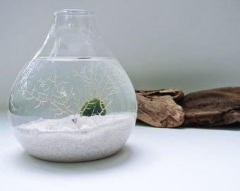 Sea Snow Aqua Terrarium - Marimo Ball, Japanese Moss Ball, Living Home Decor, Gift, Plant, Sea Fan, Sea Shells, Glass Vase, Winter