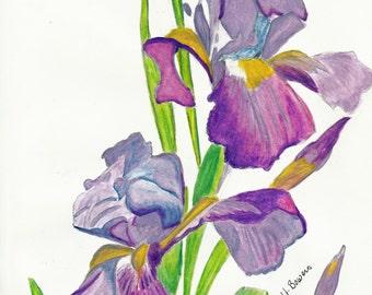 Iris Watercolor Reproduction 8x10