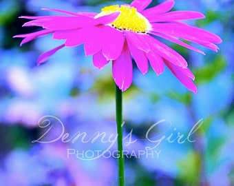 Colour pop daisy fine art photography digital download