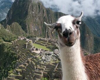 Bossy the Llama at Machu Picchu