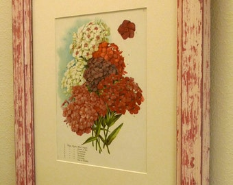 antique chromolithograph framed botanical print