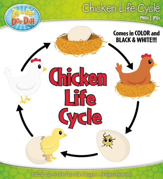 Items similar to Chicken Life Cycle Clipart Set - Includes 22 Graphics ...