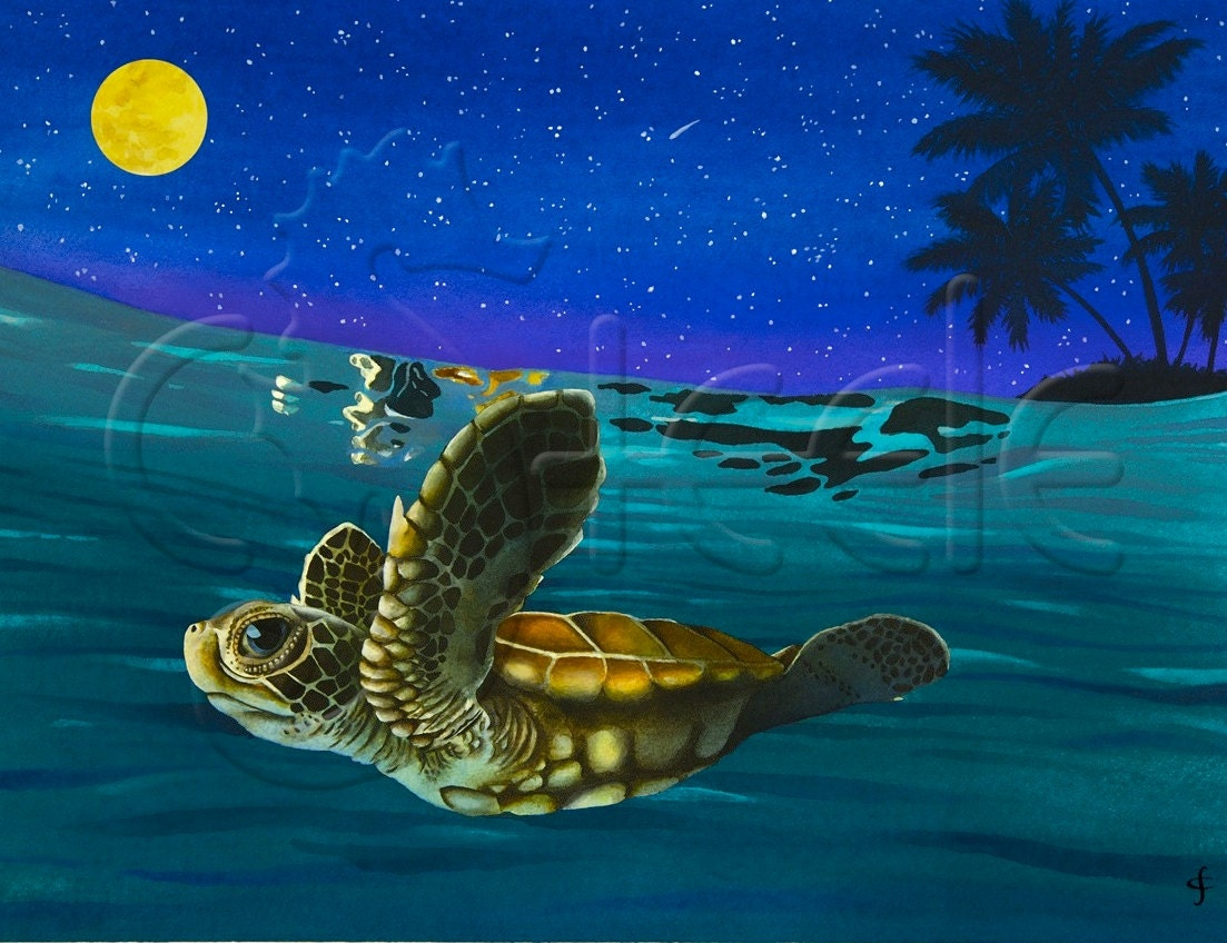 Baby Sea Turtles Swimming | Wallpapers Gallery