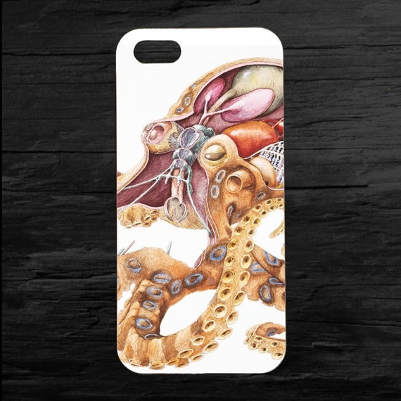 Octopus Anatomy images