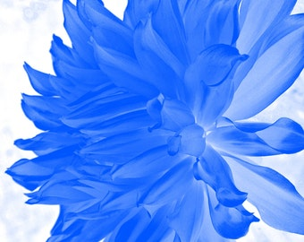 Flower Photography- Nature Photography- Fine Art Photography- Blue- 8x12 Print
