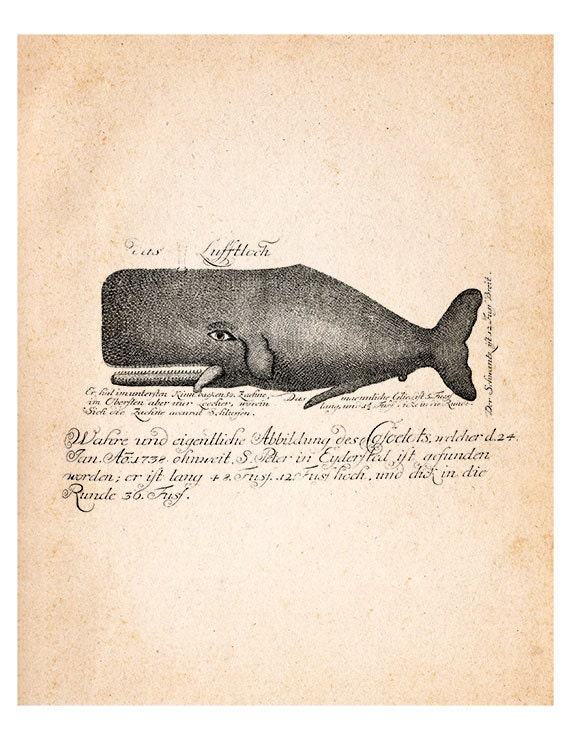 Items Similar To Antique Blue Whale Vintage Illustration