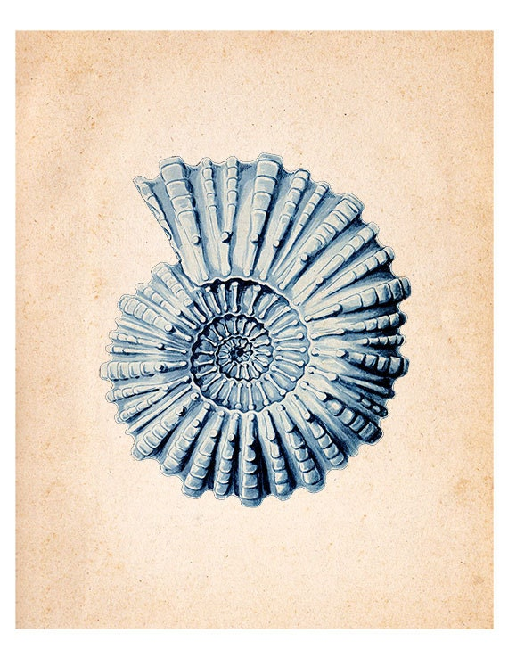 Items similar to sea plankton algae 08 vintage for Vintage ocean decor
