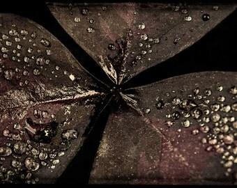 RAIN DROPS-photography, color, art, nature,plant,