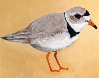 Piping Plover - Pluvier siffleur