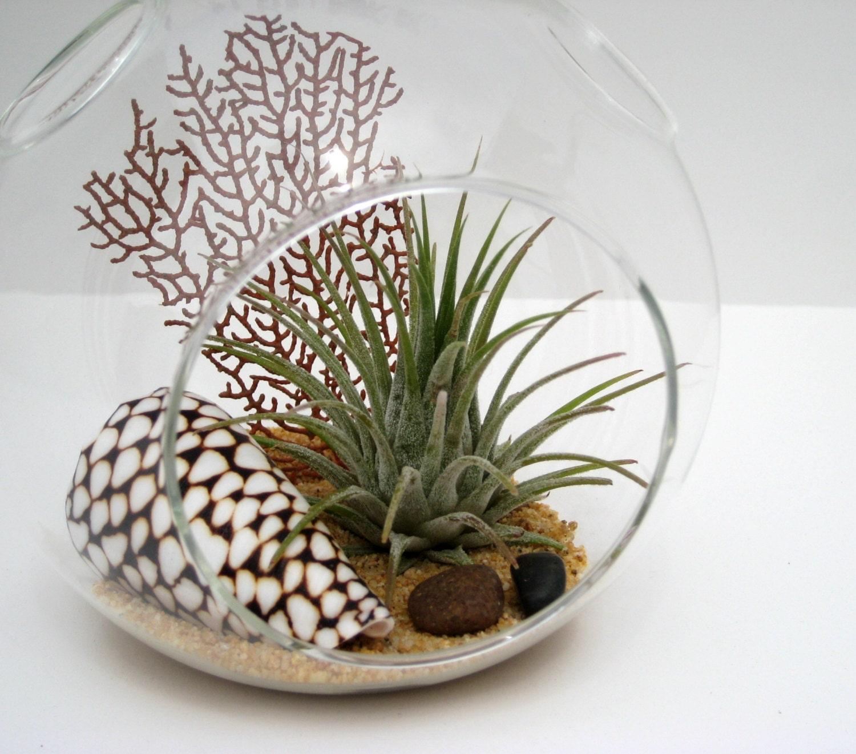 ... terrariums with air plants source abuse report terrarium air plant