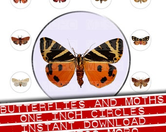 Digital download of real butterfly and moth images, set in one inch rounds, instant download