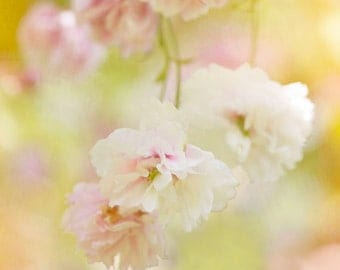 Nature photography, Blossom, Cherry, Spring, Flowers, Pink, Sunny, Wall Decor.