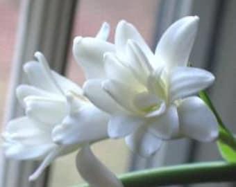 Tuberose Gardenia Perfume oil.. Aroma : Romantic, Soothing, Relaxing.