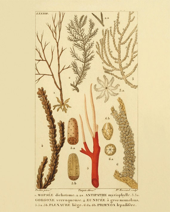 Antique sea coral art print vintage nautical print sea beach for Vintage ocean decor