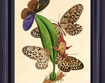 Botanical BUTTERFLIES 8x10 Giclee Art Print Picture Vintage Antique Spotted Insect Orchid Series 1 BI0002