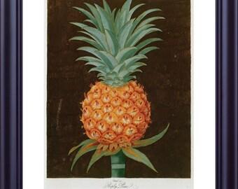 Fruit Print Large 11x14 PINEAPPLE by BROOKSHAW 1812 Riply Pine Complete Plate Botanical Dark Background Tropical Kitchen Decor LP0011