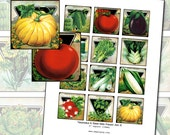 Antique Vegetable & Herb Seed Packet Art II 2x2 inch digital collage sheet 50mm x 50mm square
