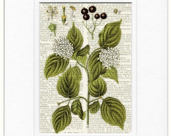 dogwood dictionary page print