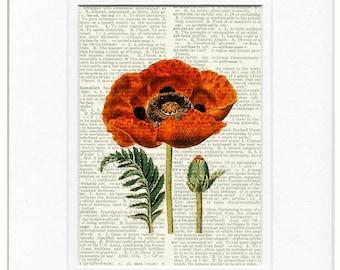 poppy I print