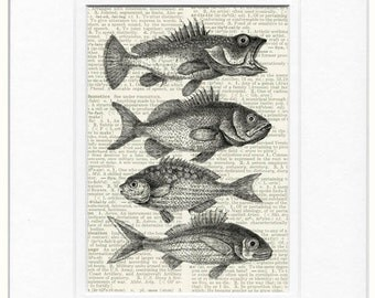 Fish times 4 print