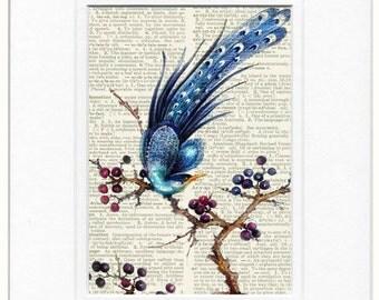 peacock reproduction print