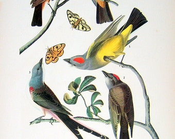 Audubon Birds Print - Three Tyrant Flycatchers, Two Wrens  - 1941 2 sided Book Page with Names and Descriptions