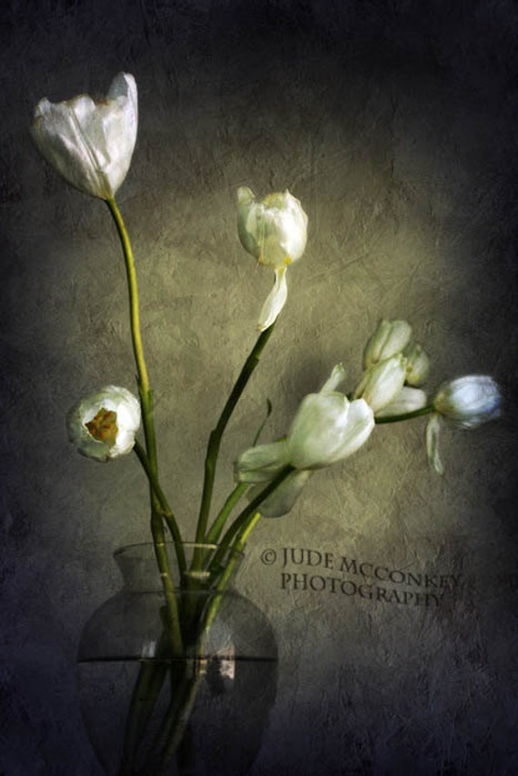 Life Tulips still life photography nature by judemcconkeyphotos on