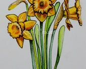 Watercolor painting of Yellow Daffodils / spring flowers / original watercolor and ink painting / fine art
