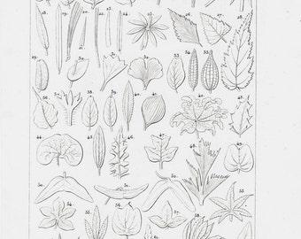 1837 Antique BOTANY fine engraving, Leaf shapes. Plant physiology