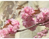 """April in Paris - Cherry Blossoms at Notre Dame cathedral pink cream beige dreamy floral decor 8"""" x 12"""" and up - Original Fine Art Photograph"""