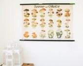 Vintage Pull Down School Chart, Mushrooms