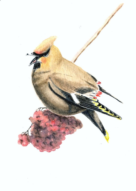 Bohemian waxwing 5x7 original watercolor painting, art & collectibles, birds earthspalette