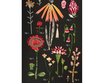 large botanical chart, red orange variations, mixed media print