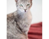 Cat Photography Greeting Note Card Grey Pet Lover Gift