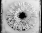 White flower photograph on white background - floral motif - black and white fine art photography - home decor - vintage - square format