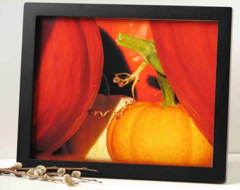 pumpkin photography, fall photography, kitchen decor, 3 sizes available