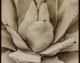 Mexican Agave Print, Agave Art, Southwest Art, Southwest Decor, Southwest Wall Art, Black and White Fine Art Photograph Print, Desert Art