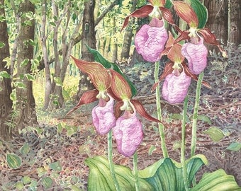 Moccasin Flower giclee print