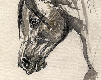 Arabian horse original ink drawing