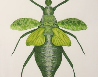 Green Nymph in Ink, pencil and Watercolour - Print of Original