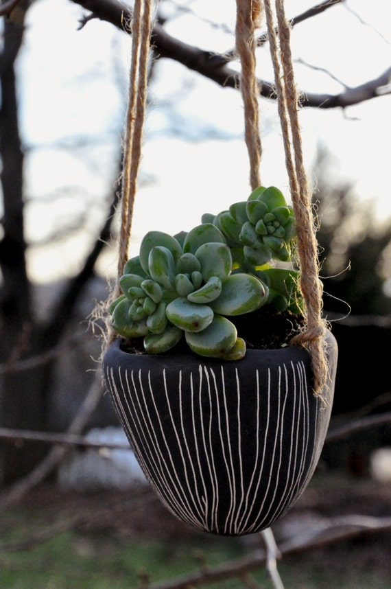 Colgante suculenta plantador