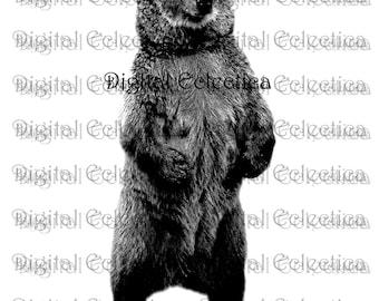 Bear Wildlife Engraving. Bear PNG. Animal PNG. Bear Prints. Bear Images. Bear Pictures. Bear Art. Bear Clipart. Bear Drawings. No. 0029.