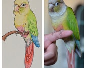 "Personalized Drawing of Your Parrot, 4""x6"""