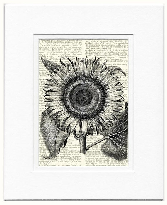 sunflower, vintage flower print