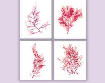 Ocean Beach Coastal Wall Decor, Coral Botanical Artwork, Seaweed Prints, Matted Print, Coastal Living, Set of Four