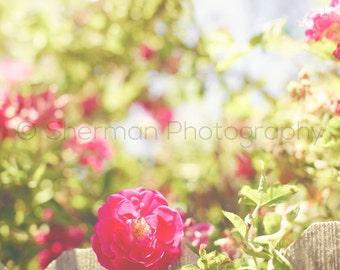 Flower Photography - Rose Photo - Garden Photography - Red Rose Photo- Vintage Garden - Red Roses Garden Print - Flower Art - Red Rose Print