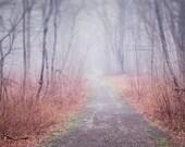 Nature Photography, Autumn Landscape Art Print, Woodland Decor Wall Art, Forest Landscape Photography Print, Maine Art