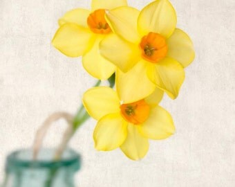 Daffodil Art Print, Flower Photography, Botanical Print, Fine Art Photograph, Spring Flower Photo, Floral Wall Art