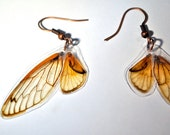 Real Seventeen Year Cicada Wing Earrings